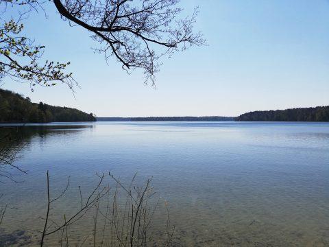 Stechlinsee: glasklar, eiskalt und von Bäumen umgeben